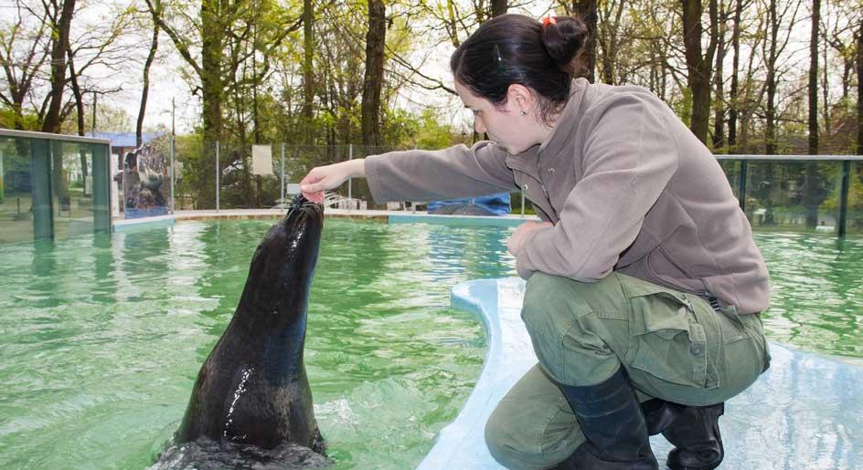 tierpfleger zoo gehalt